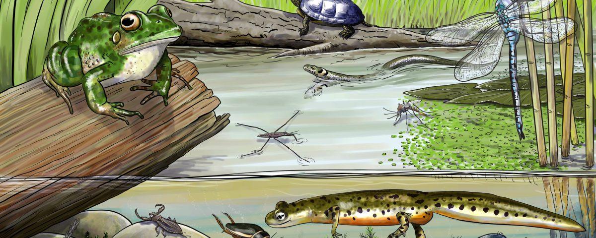 Ekosystem - co to jest
