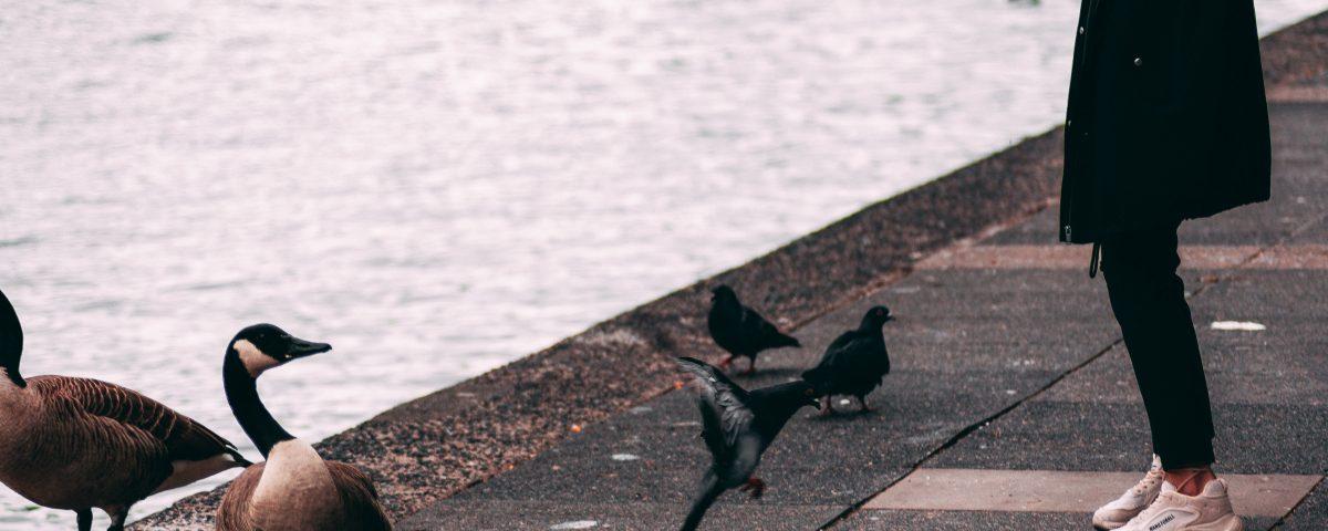 Co jedza kaczki, czyli czym dokarmiac ptaki