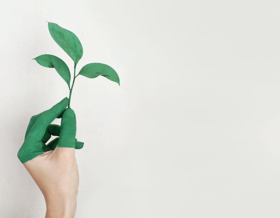 jak zacząć być ekologicznym